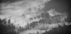 רקע של יער בשחור לבן