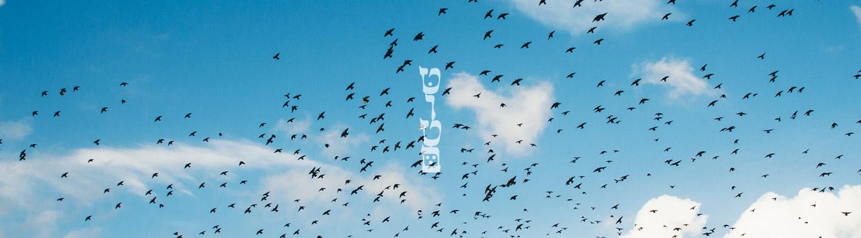 לוגו טוטם על רקע שמיים וציפורים | קרדיט לbarn images